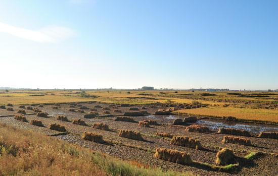 凤凰山农业发展有限公司